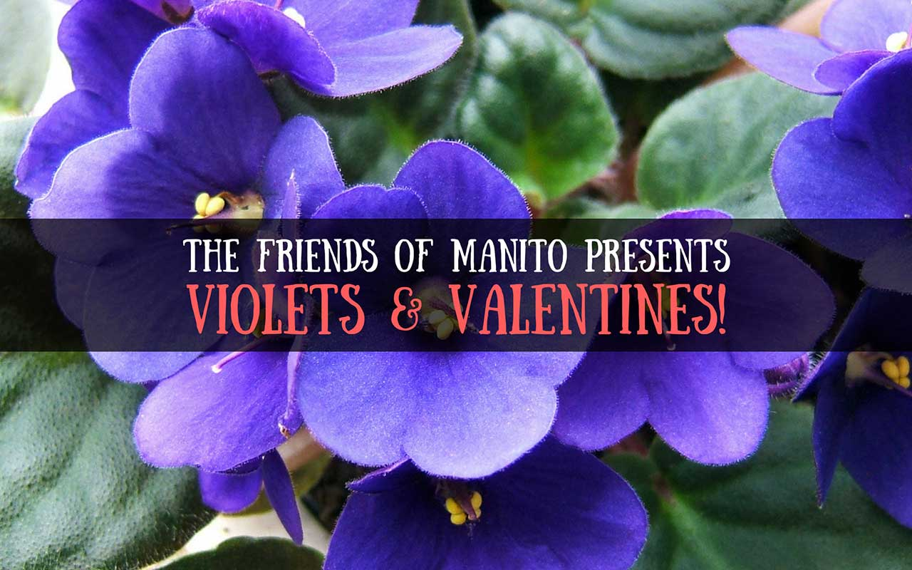 Violets and Valentines